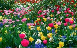 florii-colorate