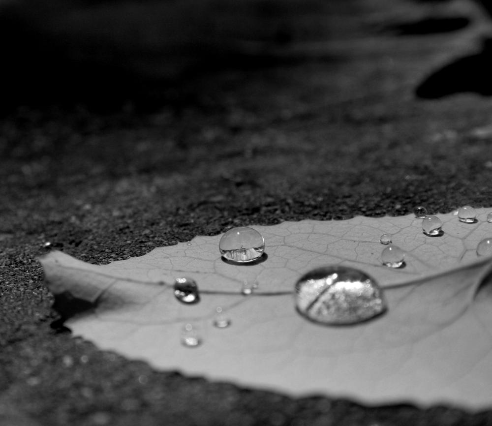 lacrimi-pocainta