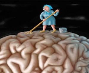creier spalat