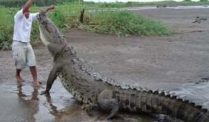 crocodile-nil