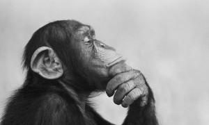 monkey89