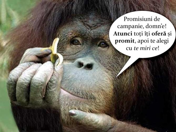 promisiuni-electorale