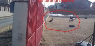 """Noul peisaj morbid al puilor de câine sugrumati – noua """"capodoperă"""" a primăriei și a comunității"""