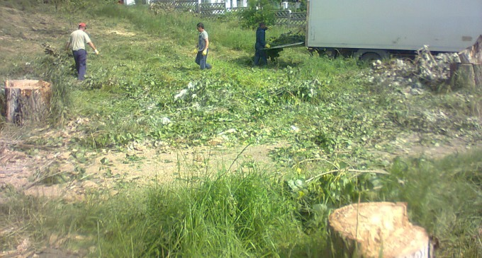Taieri masive de copaci in Parcul Tabacarie din Constanta pentru a face loc constructiilor abuzive