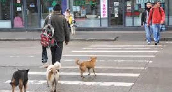 Mangalia se vrea un oraș fără maidanezi
