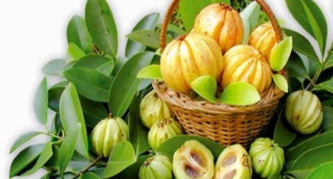 Garcinia cambogia, fructul tropical cu proprietati miraculoase