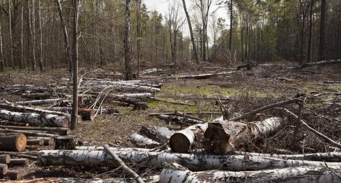 Din pădurile noastre se fură… ca-n codru!!!