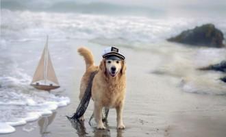OFICIAL! Câinii vor fi interziși pe plajă,iar proprietarii vor fi amendați!