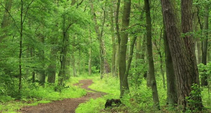 Hei, dobitocilor, mergeți la pădure… căpușele nu sunt lupi sau crocodili!!!