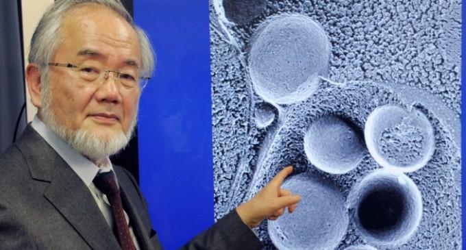 Yoshinori Ohsumi este câştigătorul Premiului Nobel pe Medicină în acest an!