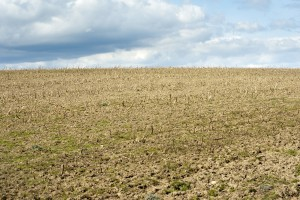 Stubble in an agricultural field