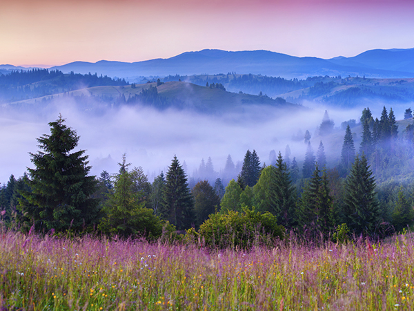 Foggy summer morning in the Carpathian mountains