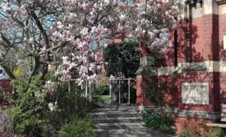 Prânzul cu magnolii