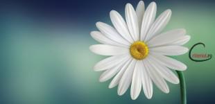 Miracolul FILON, sau… un fel foarte frumos de a fi OM