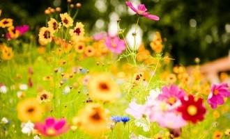 Care sunt semnificatiile simbolurilor din vise: flori si apa
