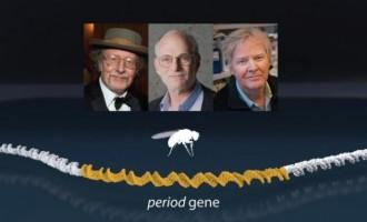 IMPRESIONANT!Trei savanţi americani au câștigat Premiul Nobel pentru Medicină cu o descoperire extraordinară
