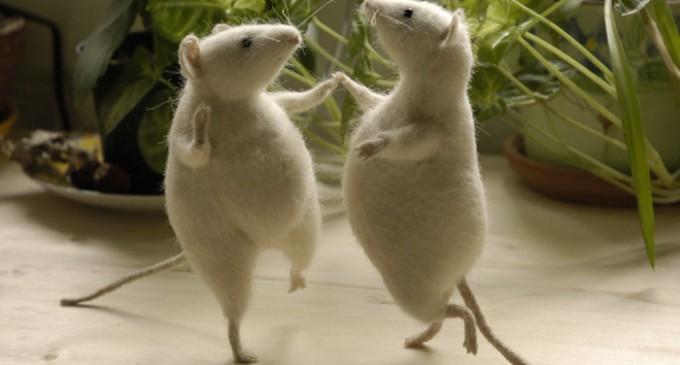 Poporul migrează, șoarecii dansează…