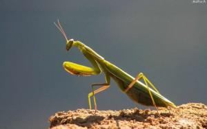 Solutii viabile anti insecte