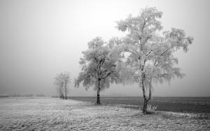 winter-tree-field-wallpaper_1920x1200_87790