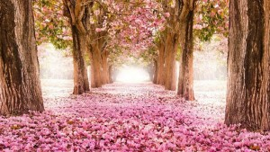 imagen-spring-live-wallpaper-1gal
