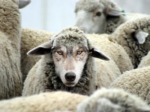 wolf-in-sheep-clothing-2