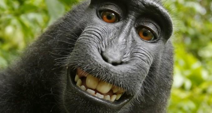 Mesaj primit de maimuțoi: Plătiți sau… va fi vai de voi!