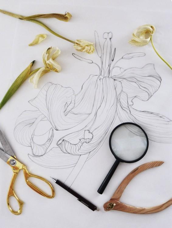 Ilusrație botanică în lucu
