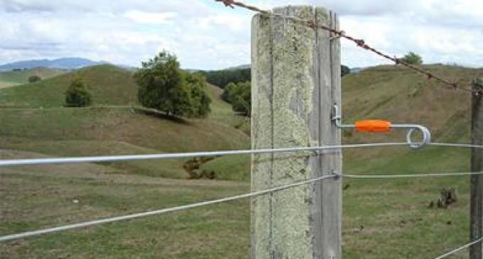 Istoria gardului electric. Când a apărut?