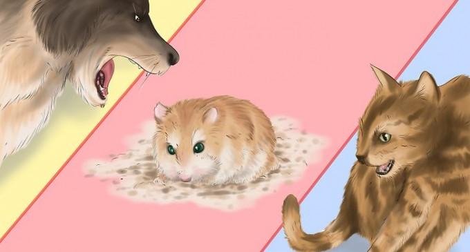 Hamsterul, înghesuit, îmi pare azi cam… slăbit!