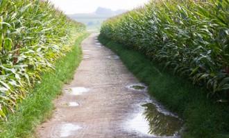 Îngrășămintele foliare – elementele nutritive și rolul lor