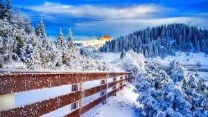 o-zi-placuta-de-iarna
