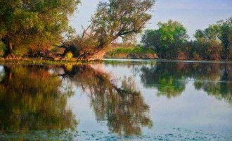 4 motive pentru care Delta Dunarii este principala destinatie a iubitorilor de natura