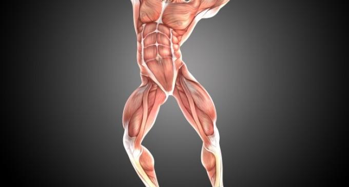 Clenbuterol Balkan te ajuta sa slabesti si sa acumulezi masa musculara. Cum il folosesti?