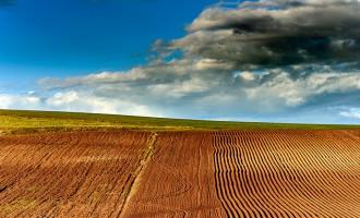 Pariul pe lucernă. Specialiștii aduc argumente pentru dezvoltarea culturilor agricole proteice – Agricultura