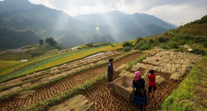 Apeluri, mesaje și… vreme? Turnurile de telefonie mobilă pot prezice când vine ploaia – Agricultura