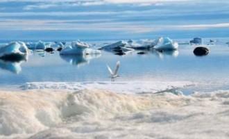 """""""Surpriză totală"""": Râurile glaciare absorb mai repede dioxid de carbon decât pădurile tropicale, au descoperit cercetătorii – Mediu"""