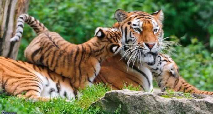Lucruri pe care nu le stiai despre animale