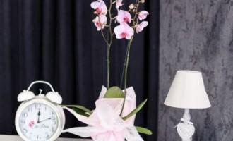 Festivitatea perfecta impune aranjamente florale in cosuri