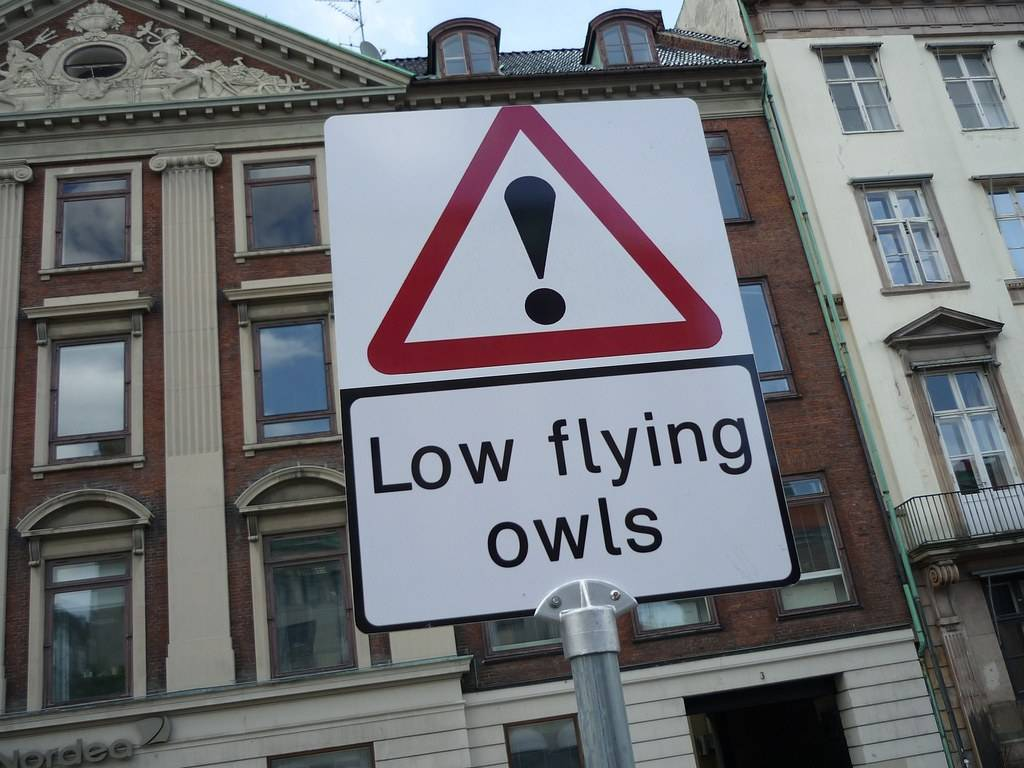 8883-funny-cation-low-flying-owls
