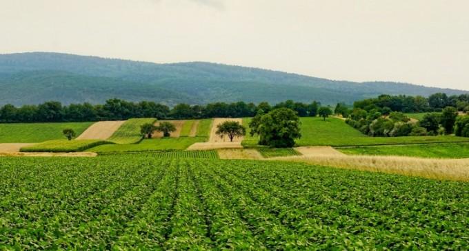 5 motive pentru care ar trebui sa dezvolti o afacere in agricultura