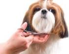 Totul despre tunderea cainilor cu blana dubla in cea mai cunoscuta frizerie canina in Timisoara