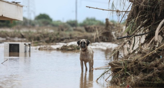VIDEO Inundații grave în Grecia: cel puțin cinci persoane și-au pierdut viața – International