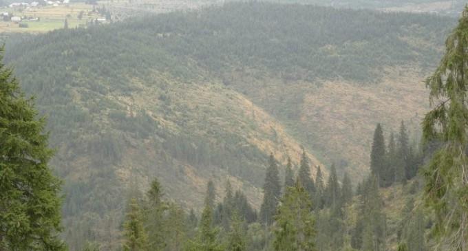 Emerging Europe: Pădurile seculare ale Europei în curs de dezvoltare sunt în pericol – Mediu