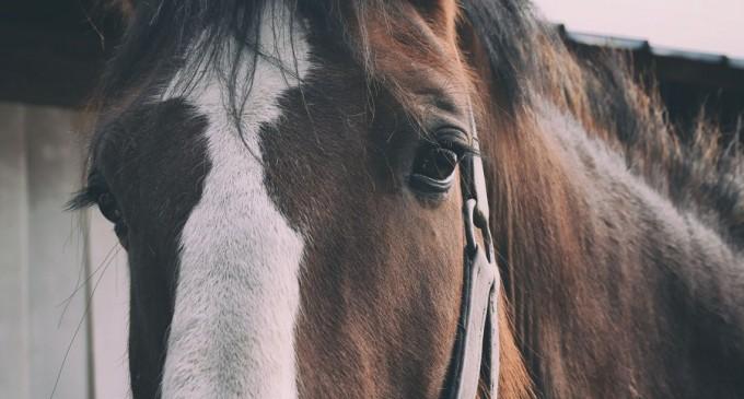 Caii mutilați din Franța: ce se știe despre valul de atacuri. Plus – 50 de ani de precedente și de speculații – International