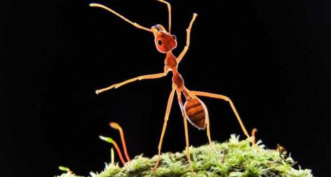 Digi24: Izolăm grupul sau eliminăm bolnavul? Cum procedează furnicile în cazul epidemiilor – Stiintele vietii