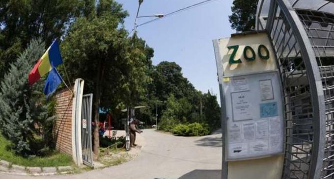 Timiş: Toţi cangurii de la Grădina Zoo au fost ucişi de câini necipaţi – Esential