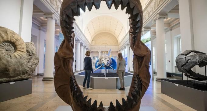 Malta anunță că îl lasă pe prințul George să păstreze dintele de megalodon primit cadou de la David Attenborough – International