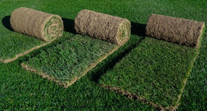 Care sunt principalele diferențe dintre gazonul rulou și cel obținut prin insamantare?