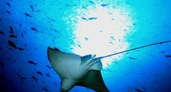 Rezervația naturală Galapagos este amenințată de navele de pescuit ale Chinei – Terra