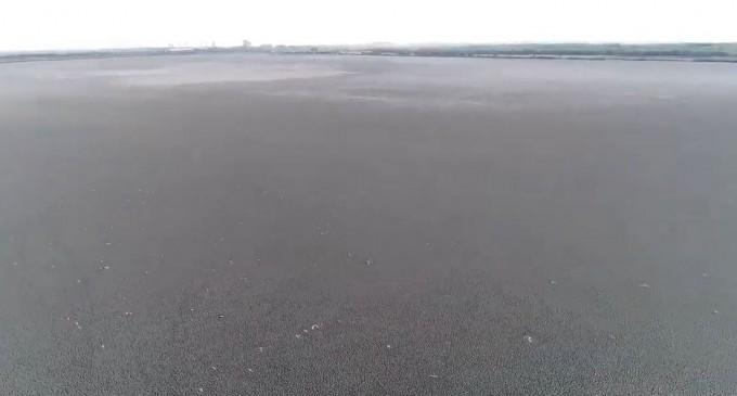 VIDEO Dezastru ecologic: Lacul Iezer Călărași a secat complet – Esential